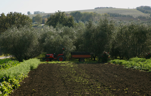 Part of the freshly turned otra (garden) with the La Morla olive grove and Claudio's prized Lamborghini tractor in the background.