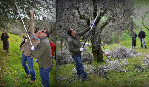 Tiziano busy pruning trees in the competition